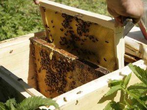 В Башкирии могут организовать пчеловодческие туры для иностранных туристов