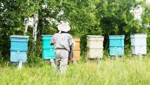 Бесплатный гектар. Как дела у пчеловодов?