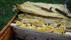 запечатанные соты с мёдом