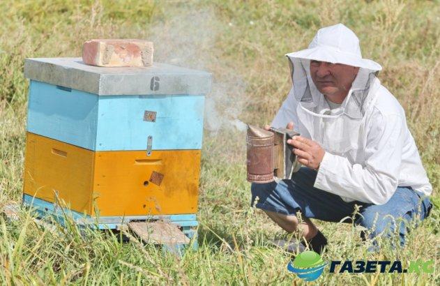 Открытие пчелиной фермы в селе Ак-Добо