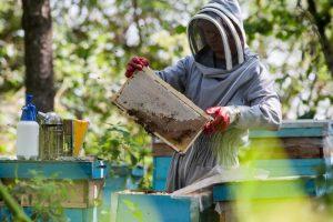 ГОСТ на мёд устарел