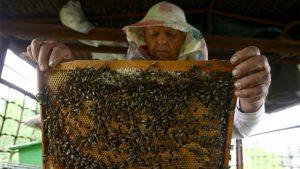 контроль за качеством мёда