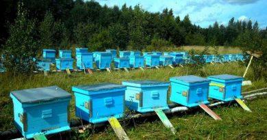 признан утратившим силу закон о пчеловодстве