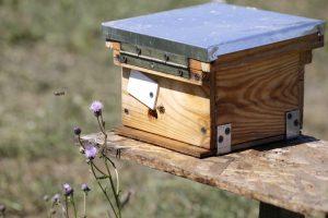 Как краснояружский пчеловод выводит добрых пчёл