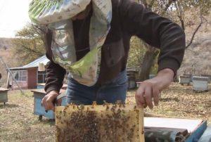 Пчеловодство возрождается в Алакольском районе Алматинской области