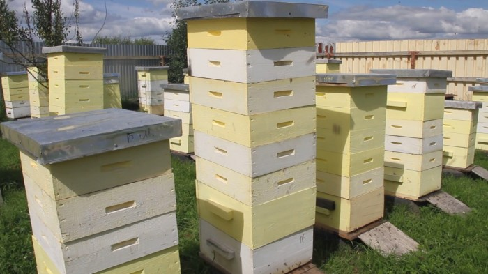 Пчеловод восточного Казахстана переходит на канадскую технологию