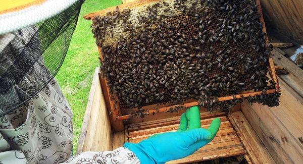 рамка с пчёлами