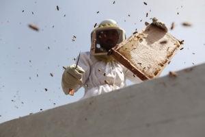 запечатанный мёд