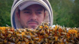 канадские пчеловоды