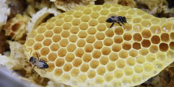 соты мёд