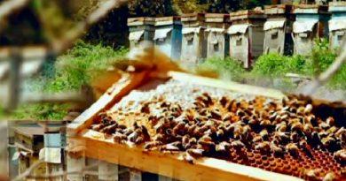Более 10 новых пород вывел жамбылский пчеловод