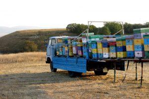 В Крыму пчеловодов приравняли к организаторам пикников