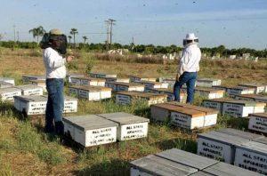 кража пчёл в сша русскими