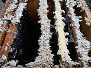 пустые ульи с рамками и моль