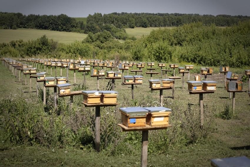 новости пчеловодство